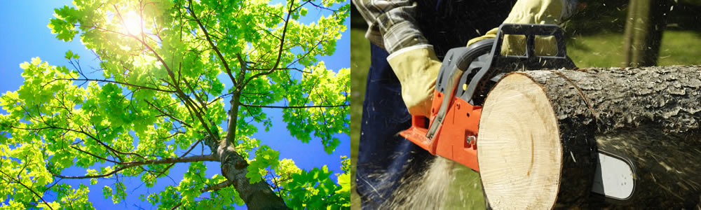 Tree Services Braddock